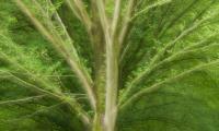 Twiske, ontluikend groen